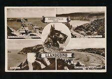 Dogs SCOTTISH TERRIER Wales Caenarfonshire Llandudno M/view 1939 RP PPC