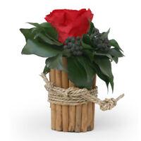 Blumengesteck Zimtbecher 1 infinity Rose konserviert haltbar 3 Jahre