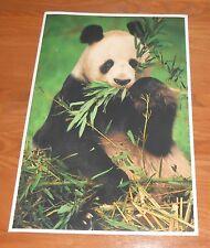 Giant Panda Poster 1993 Original 13x19