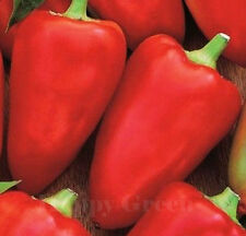 VEGETABLE - SWEET PEPPER - 50 SEEDS - RED HEART - MINI MARCONI