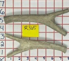 2 Branched / Forked Real Whole Mule Deer Antler Bone Dog Chew Treat & Toy Lot