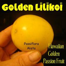~GOLDEN PASSION FRUIT~ LILIKOI Passiflora Alata Hawaii seller 60 Fresh Seeds