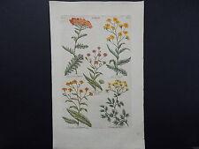Sir John Hill, Botanical, The Vegetable System 1761-1775 Yarrow S2#03
