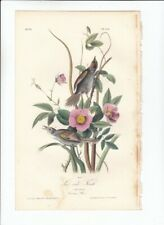 Rare 1st Ed Audubon Birds Of America 8vo Print 1840: Sea-Side Finch. 172
