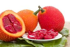 NEW!! GAC Superfruit 30 Seeds Momordica cochinchinensis gac fruit From Thailand