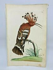 Hoopoe - 1783 RARE SHAW & NODDER Hand Colored Copper Engraving