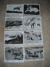 The Legend of Lobo Disney Wolf B&W 8x10 (8) Promo Photo Original Lobby 1962