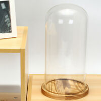 33CM Extra Large Glass Display Bell Jar Wooden Base Home Office Display