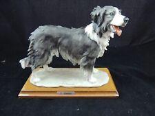 Guiseppe Armani Capidomonte Border Collie Dog Figurine