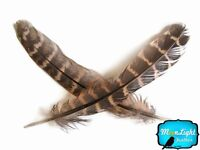 """1 Pack 4-6"""" Natural Brown Ringneck Barred Pheasant Wing Quill Feathers Pen Craft"""