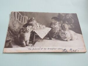 VINTAGE POSTCARD 1903 SQUARED CIRCLE WEST? TEA PARTY CATS BREAKFAST TABLE