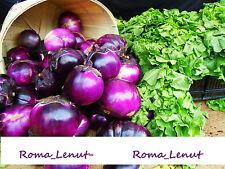 50 x Rarität Tomatensamen- Lycopersicon Esculentum Mill -Purpur 99% Keimen