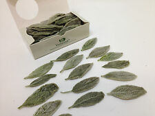 box of 100 dried preserved stachy leaves lambs ears 50mm  craft floral