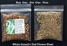 Buy 1 Get 1 Free White Lizard'S Tail Flower Way Over 400 Seeds 4 U