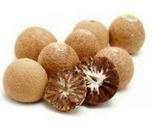 Whole Supari Grade A Quality (1 lb) Betel Nuts Areca Catechu USA SELLER