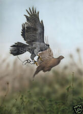 Goshawk 'Pheasant Pursuit' by Steven Lingham Ltd Edition Giclee Wildlife Print
