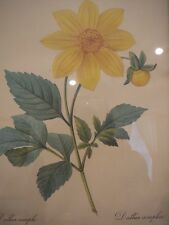 VINTAGE DAHLIA SIMPLEA FLOWER FLORAL PRINT LITHOGRAPH BESSIN GOLD FRAME #29