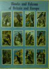 Encapsulated Laminated Animal Hawks Falcon Birds of Prey Poster Photograph Print