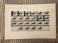 Horse - Phases of the Gallop - Antique Book Page - 1906