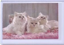 GIBSON BEAUTIFUL 3 WHITE PERSIAN KITTENS CATS POSTCARD #Y59-4 USA