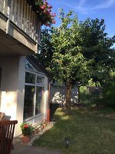 Leipzig Hohenheida EG Wohnung 92qm, Garten/Rasen 150qm