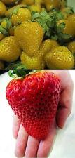 Erdbeeren Mix GELB und ROT je 25 Samen der Gelben Erdbeere und Riesenerdbeere