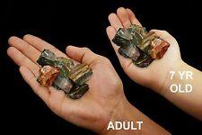 """Fancy Jasper 1"""" 5-7 Oz Set of 6 Rocks and Minerals Specimen Raw Chakra Healing"""