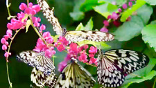 Butterfly Park & Insect Kingdom cheap ticket discount Sentosa Cable Car Luge Adv
