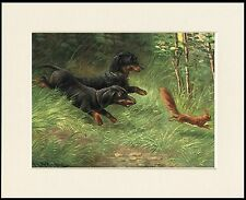 DACHSHUND DOGS CHASE SQUIRREL LOVELY DOG PRINT MOUNTED READY TO FRAME