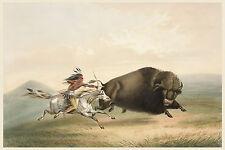 George Catlin's Indian Gallery: Hunting Buffalo on Horseback - Fine Art Print