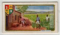Growing Tobacco In British Empire Colonies And Territories c90 Y/O Ad Trade Card