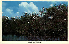 FLORIDA USA Pc White Ibis Rookery (Vögel) Everglades Park Postcard ~1960/70