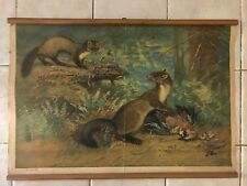 Original vintage pull down school chart of Kuna forest and rocky
