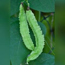 V347 Winged Bean x20 seeds Fresh Garden Vegetable Seeds
