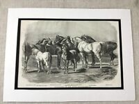 1853 Horse Print Queen Victoria's Royal Stable Stud Equine Art Antique Original