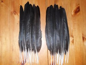 """30 CROW QUILL WING,FEATHERS,10"""" HARPSICHORD,ART&CRAFT,TRIBAL ARTS,DREAMCATCHER"""