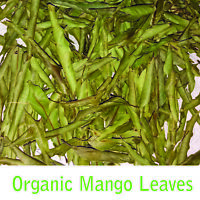 Ceylon  Organic Fresh Dried Mango leaves for More Benefits