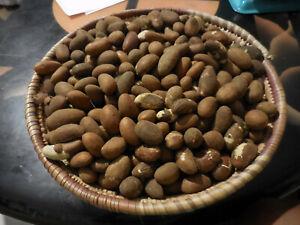 FRESH ORGANIC AUTHENTIC BITTER KOLA NUT(GARCINIA KOLA) OROGBO KOLA NUT 0.5LB
