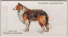 Collie Rough Coated Dog Canine Pet 1920s Ad Trade Card