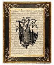 Bat 1 Art Print on Antique Book Page Vintage Illustration Hanging On Branch
