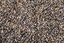 Hemp seed  - All Prepared And Cooked  Carp Bait  .  1KG.  Spod Mix , Groundbait