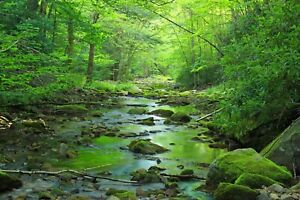 Green Forest Stream Nature Rocks Woods Landscape Wall Art Poster/Canvas Picture