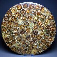 1210 Rare Beautiful More of Split Ammonite Fossil Specimen Shell Healing