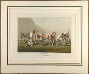c1820 Stag Hounds by Alken Sporting aquatint print wall art beautiful coloured