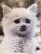 """Cute White Cat Kitten Vintage B&W Photograph David Lorente Sr 9x7"""""""