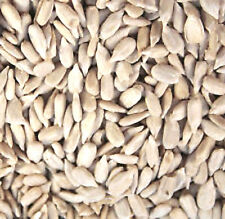 SUNFLOWER HEARTS 20 kg NO HUSKS FEED ALL YEAR ROUND FAST FREEPOST
