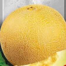 Melon EARLY 133 Seeds yellow melon organic seeds non GMO Ukraine 3 g garden idea