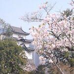 oisii-japan