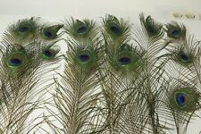 Hochwertige Federn Pfauentruthahn natur,5-8cm!Basteln.RARITÄT!Hutschmuck!