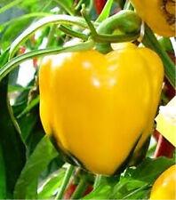 "Golden California Wonder Pepper *Heirloom* (50 Seed's) ""FREE SHIPPING""<Non-GMO>"